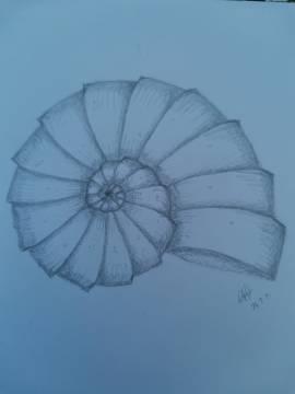Amanda's ammonite