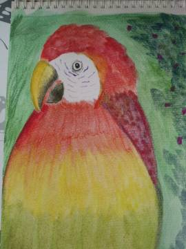 Amanda's parrot