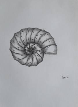 Ammonite fossil in pencil
