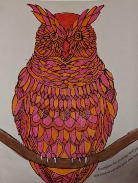 Tahir's Owl