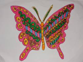 Tahir's beautiful colourful butterfly