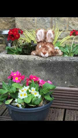 Rabbit is taking in the spring flowers