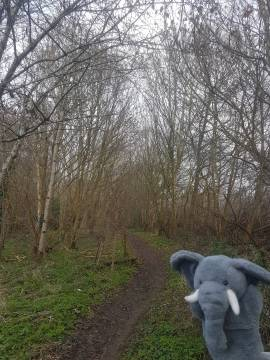 Elsie to a walk, Woodhall park walk